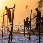Власти Шри-Ланки будут сажать на 10 лет всех причастных к договорным играм